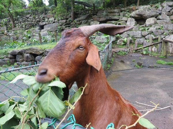 頭城農場, 體驗, 生態導覽