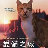 Movie, Kedi(土耳其.美國) / 愛貓之城(台) / 伊斯坦布尔的猫(網), 電影海報, 台灣