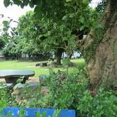 仙湖休閒農場, 生態, 野肉桂