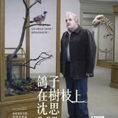 Movie, A Pigeon Sat on A Branch Reflecting on Existence / 鴿子在樹枝上沈思, 電影海報