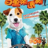 Movie, Millionaire Dog / 百萬樂透狗, 電影海報