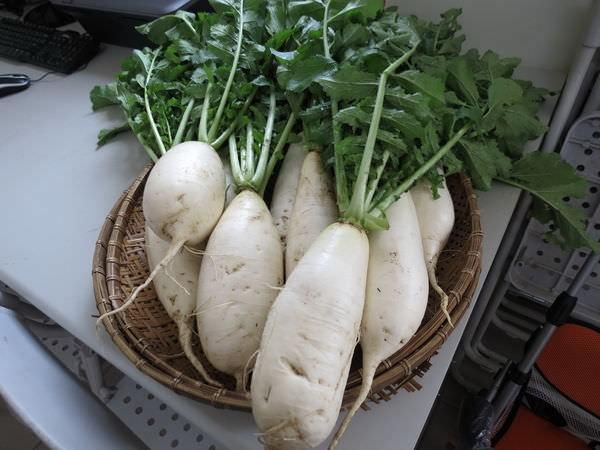 比亞外部落, 桃園縣, 復興鄉, 白蘿蔔
