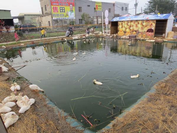 桃園地景廣場藝術節, 小鴨池塘