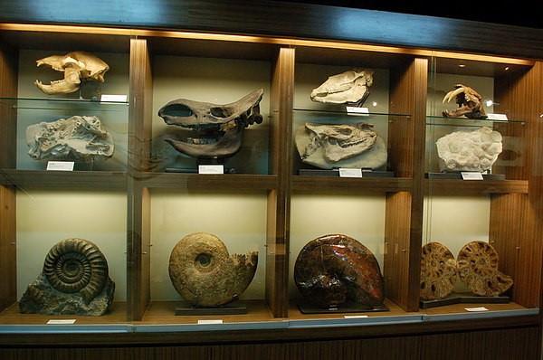 達爾文博物館