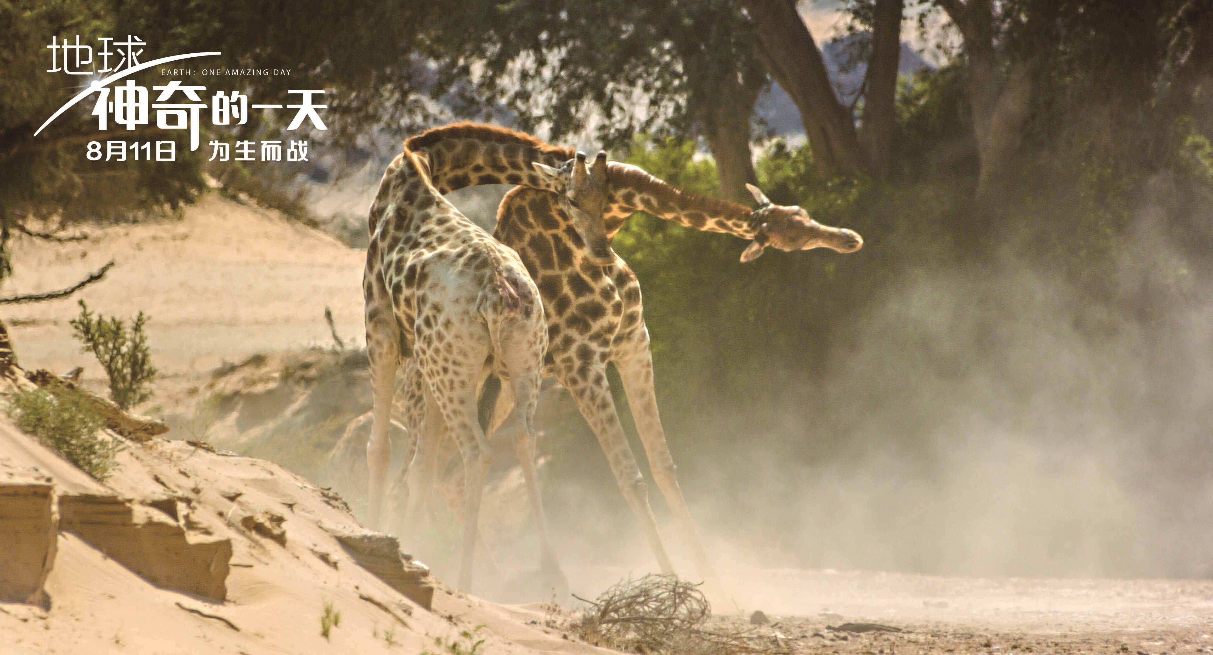 Movie, Earth: One Amazing Day(中國.英國) / 地球:奇蹟的一天(台) / 地球:神奇的一天(中), 電影劇照