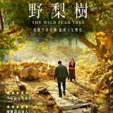 Movie, 野梨樹 / Ahlat Ağacı(土耳其, 2018年) / The Wild Pear Tree(英文), 電影海報, 台灣