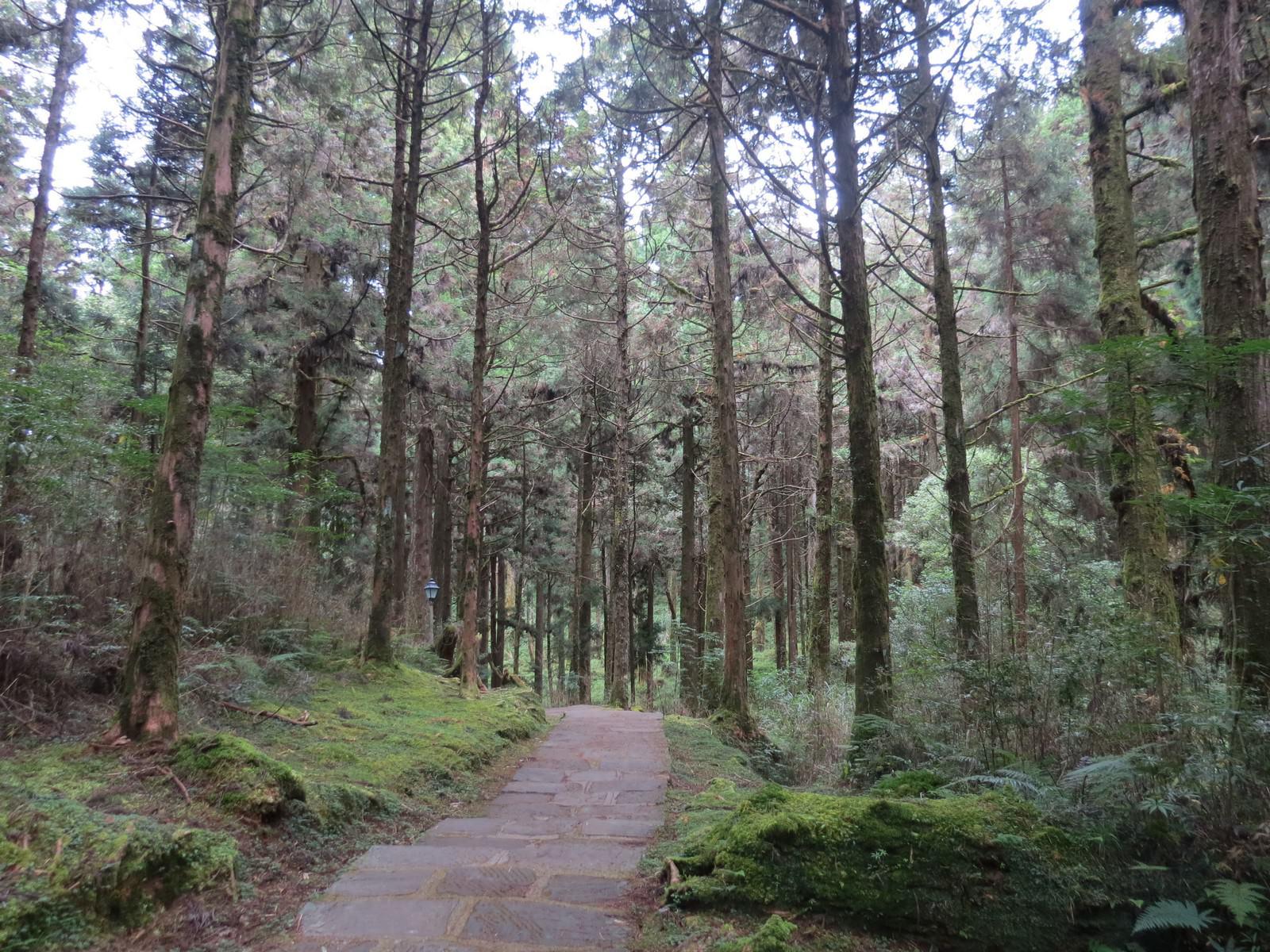 阿里山林業鐵路(森林小火車), 祝山觀日步道