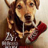 Movie, 為了與你相聚 / A Dog's Way Home(美國, 2018年) / 一条狗的回家路(中國) / 貝拉400哩的約定(香港), 電影海報, 台灣